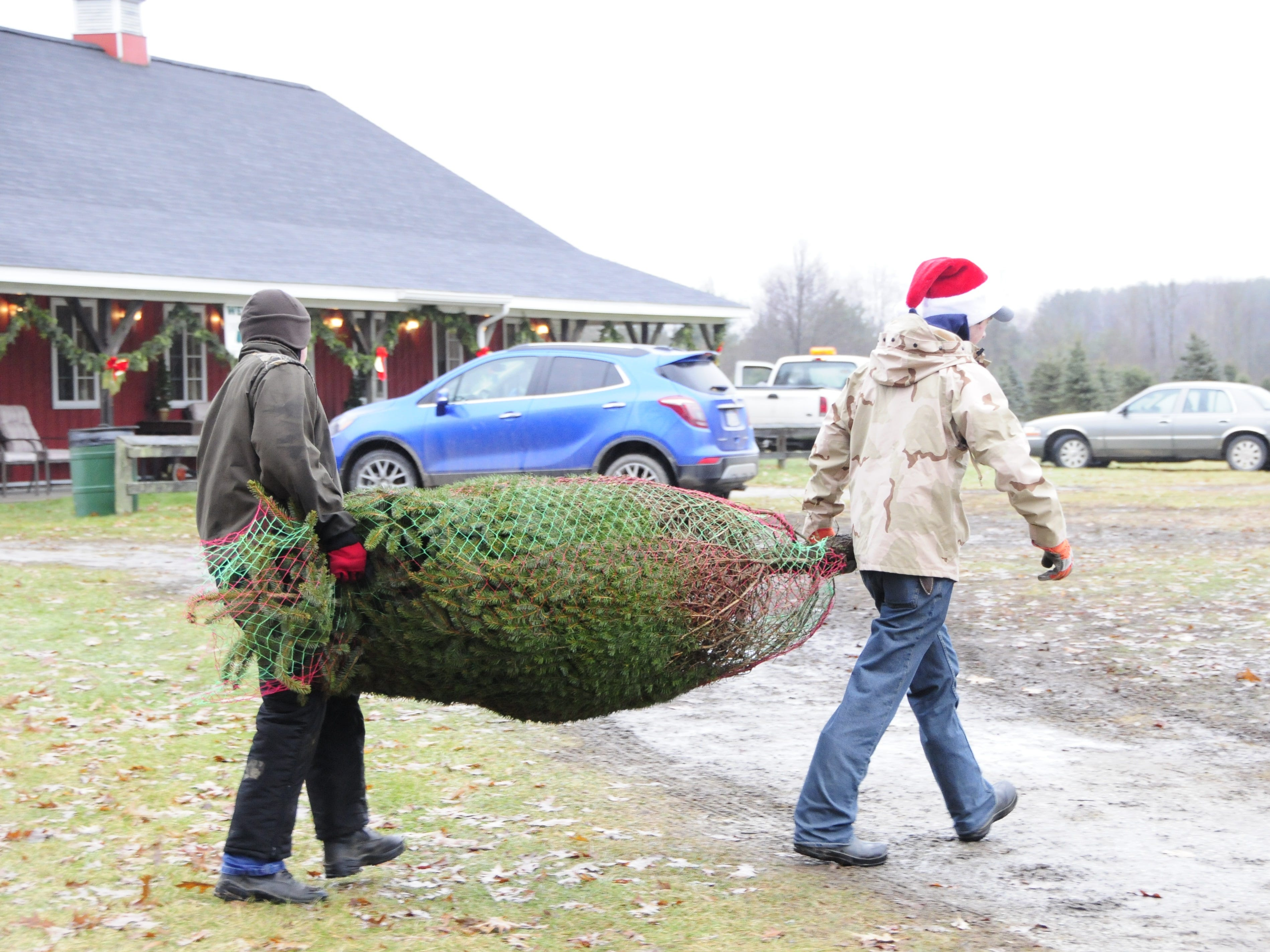 Ian Dunsmore, left, and Josh Green carry a wrapped Christmas tree to a customer's vehicle at Dunsmore Blue Spruce Tree Farm in Smiths Creek.