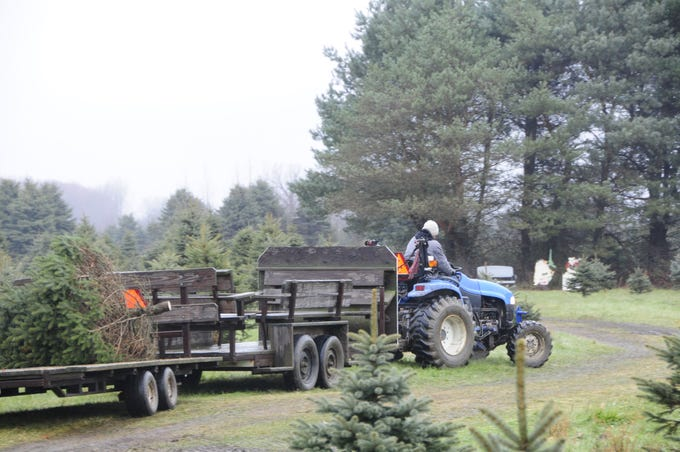 A cut Christmas tree is transported back to the parking lot at Dunsmore Blue Spruce Tree Farm in Smiths Creek.