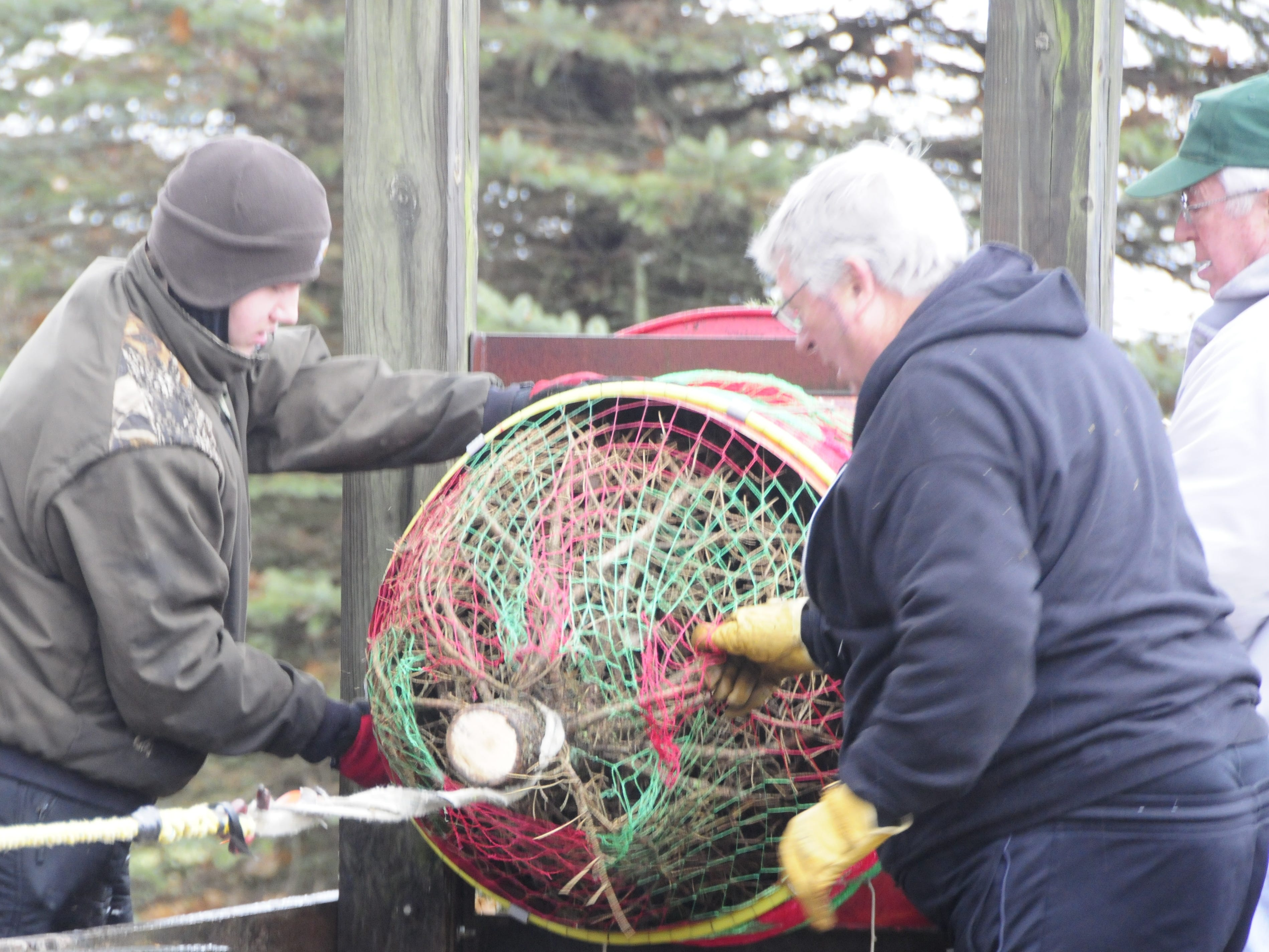 Ian, Clyde and Ken Dunsmore wrap a Christmas tree at Dunsmore Blue Spruce Tree Farm in Smiths Creek.