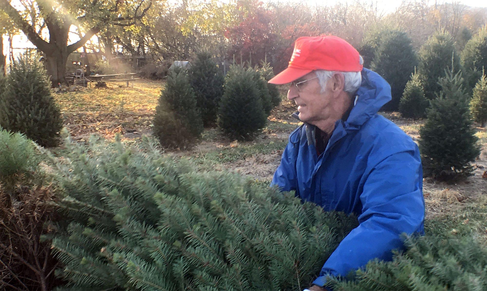 Cpo Mwd 112318 Christmas Trees