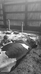 Eight year old Max Tilderquist, 10, says goodbye to his beloved cow, Seven, who he owned since he was a toddler.