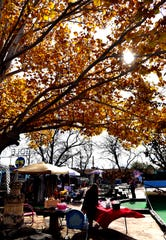 Leaves turn a bright amber in a tree at Play Faire Park during Small Business Saturday. Vendors were set up around the miniature golf course, beneath the trees.