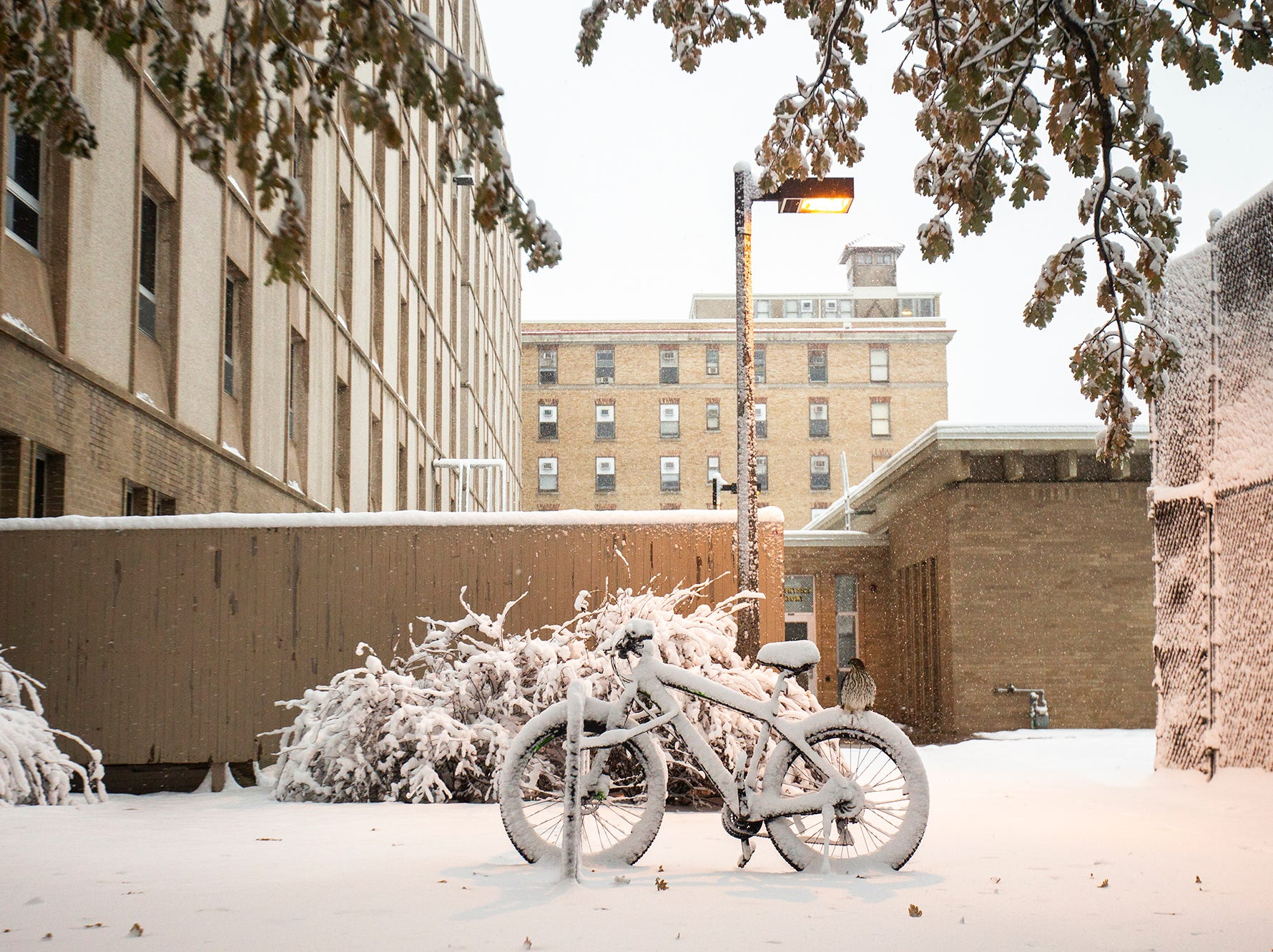 A hawk lands on a snow covered bicycle during a storm on Sunday, Nov. 25, 2018, outside Van Allen Hall on the University of Iowa campus in Iowa City.