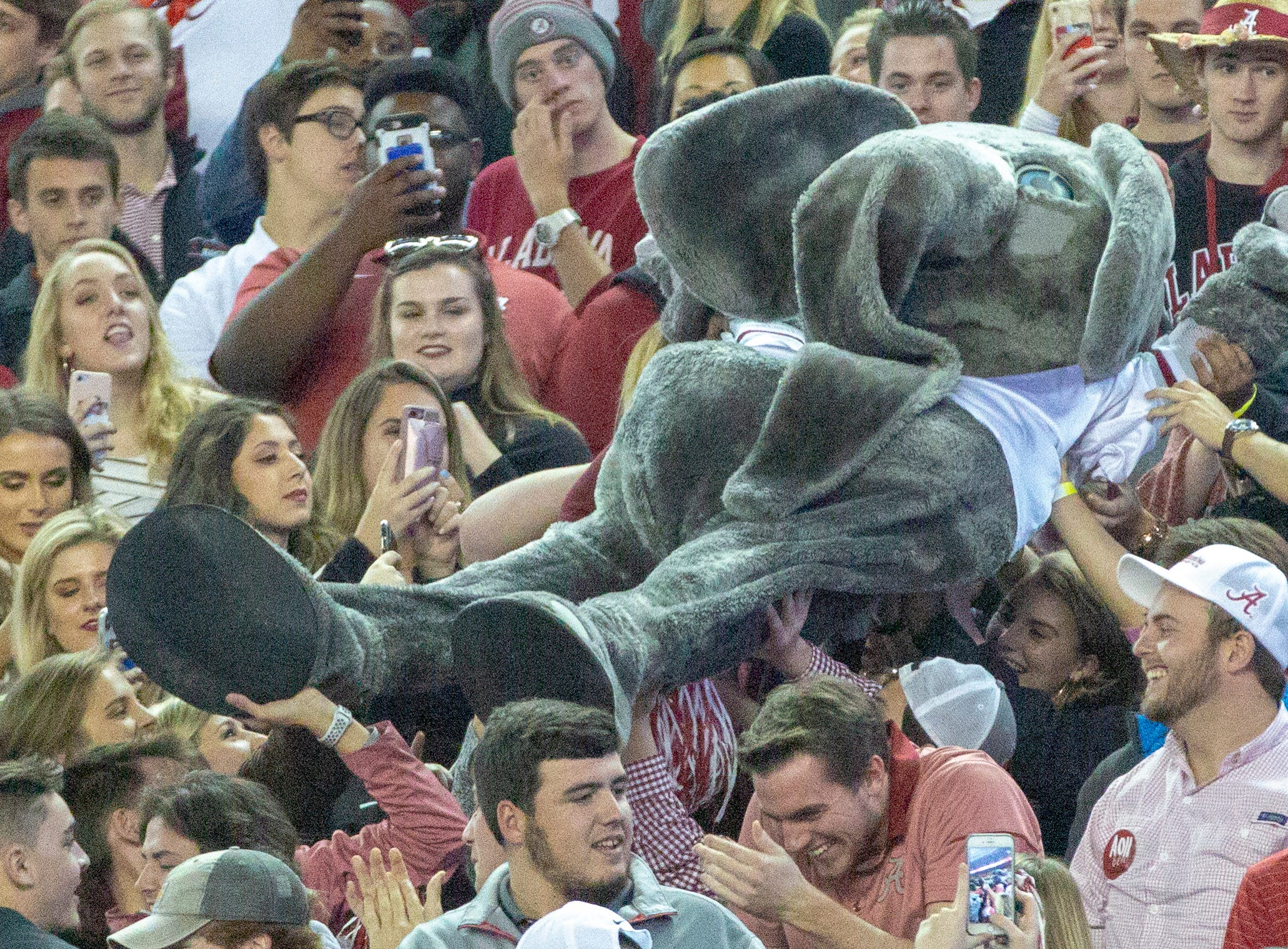 Big Al, the Crimson Tide's pachyderm mascot, crowd surfs in the student section.