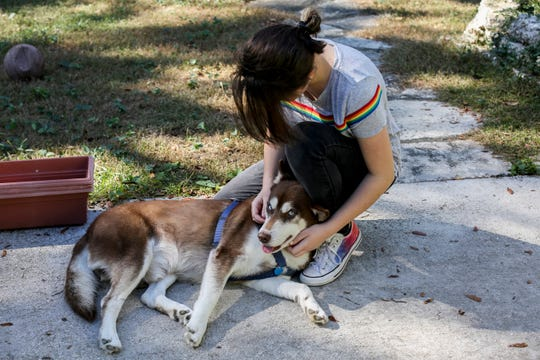In this Wednesday, Nov. 21, 2018 photo, Rose Verrill, 13, rubs the head of a brown and white Husky named Sinatra at her home in Seffner, Fla. Eighteen months after the dog disappeared from his home in New York, he ended up wandering in a Florida neighborhood where Verrill took him in. Turns out, Sinatra once belonged to Zion Willis, 16, who died in a gun accident in Brooklyn, N.Y., in 2015. He'll be reunited with her family in Baltimore on Nov. 25.