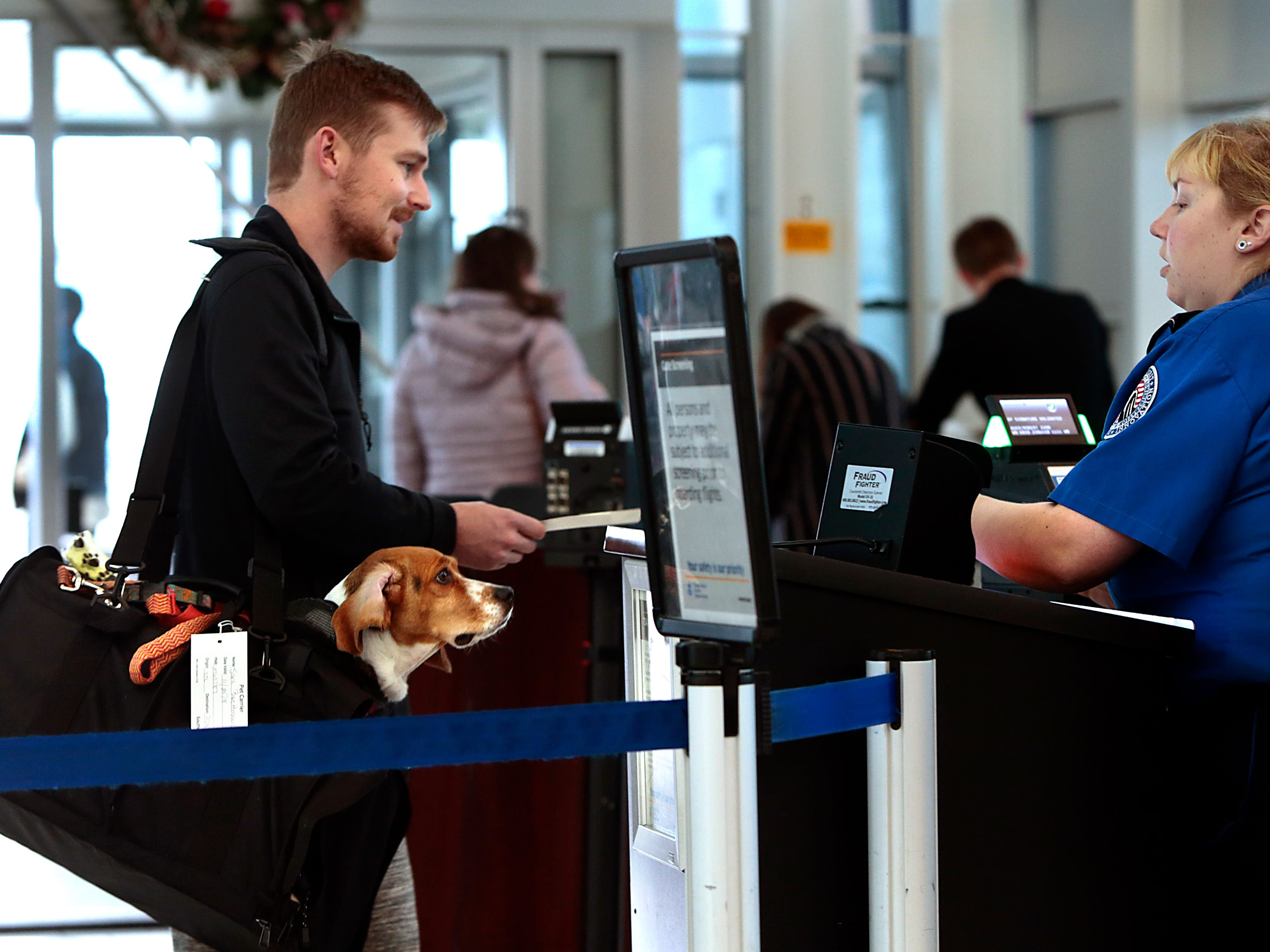 """Ivan Auer and his beagle Lillian greet a TSA agent at St. Louis Lambert International Airport as he and his girlfriend Sara Buettmann head home to Portland, Ore., Sunday, Nov. 25, 2018, after spending Thanksgiving with Buettmann's family in Ballwin, Mo. Sunday is traditionally the busiest travel day at the airport and the couple was ready for any delays. """"We're loaded with treats,"""" said Buettmann."""