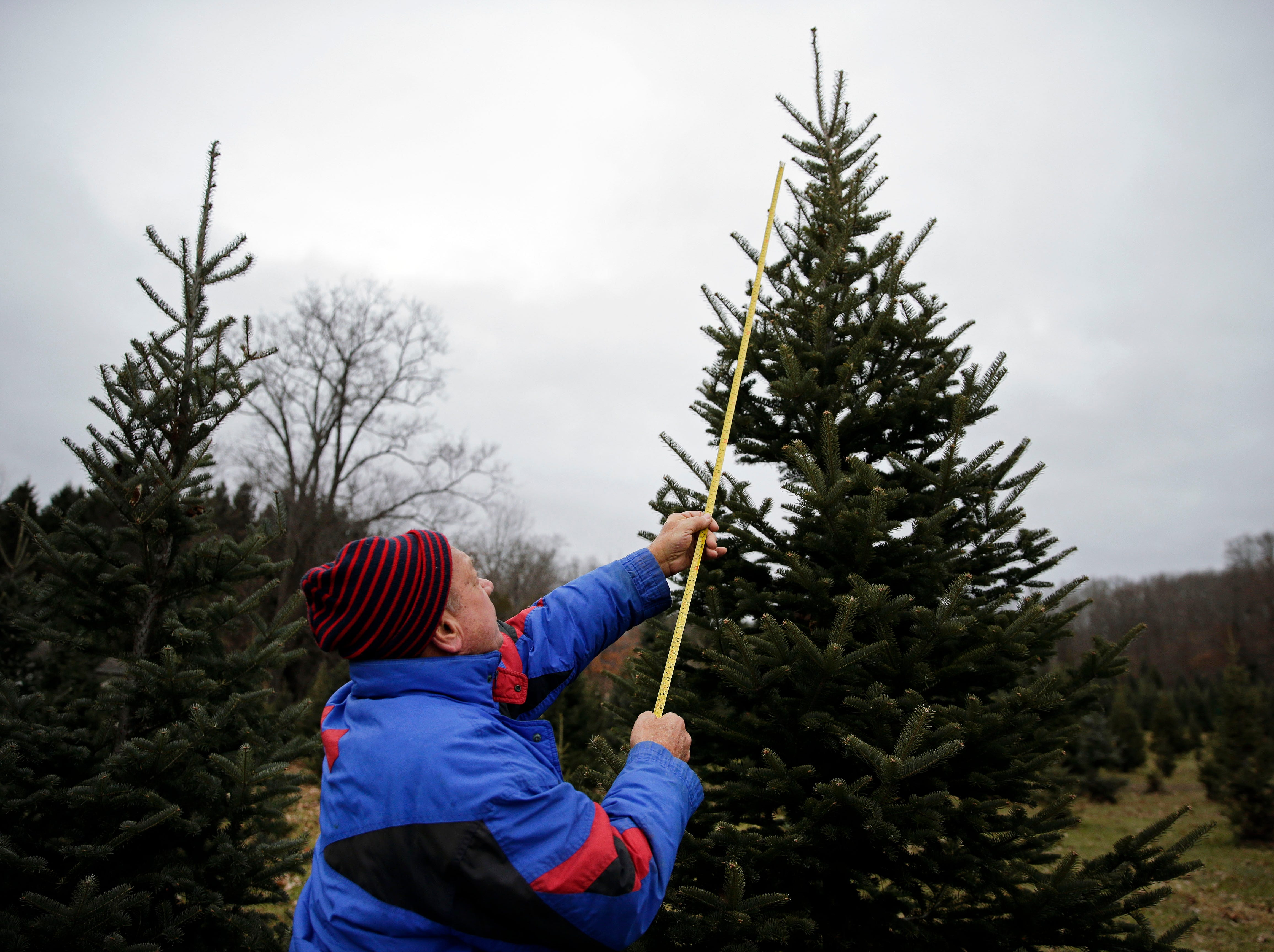 Tom Heitl, formerly of Wisconsin, uses a tape measure as he helps his son's family find a tree Sunday, November 25, 2018, at the Mosquito Hill Tree Farm in New London, Wis.Ron Page/USA TODAY NETWORK-Wisconsin