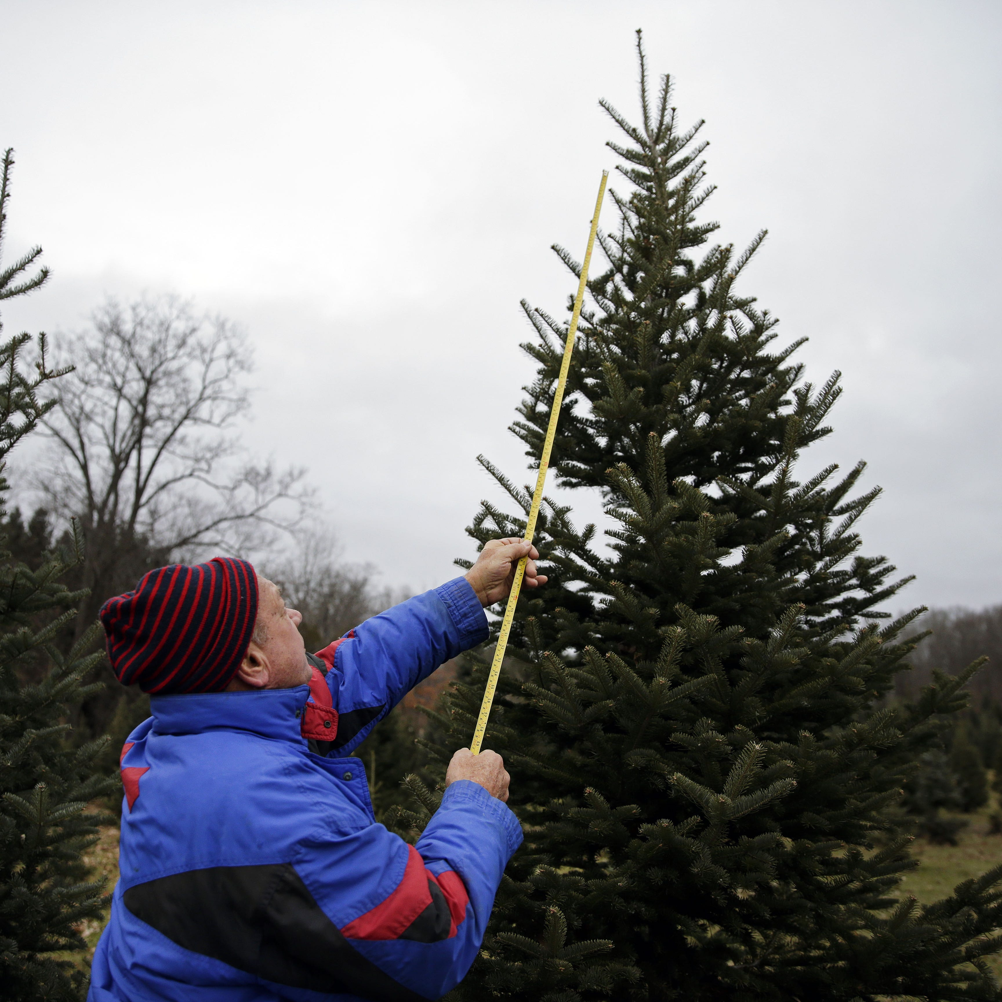 Christmas tree hunting? Here are cut-your-own (and pre-cut) options around the Fox Cities
