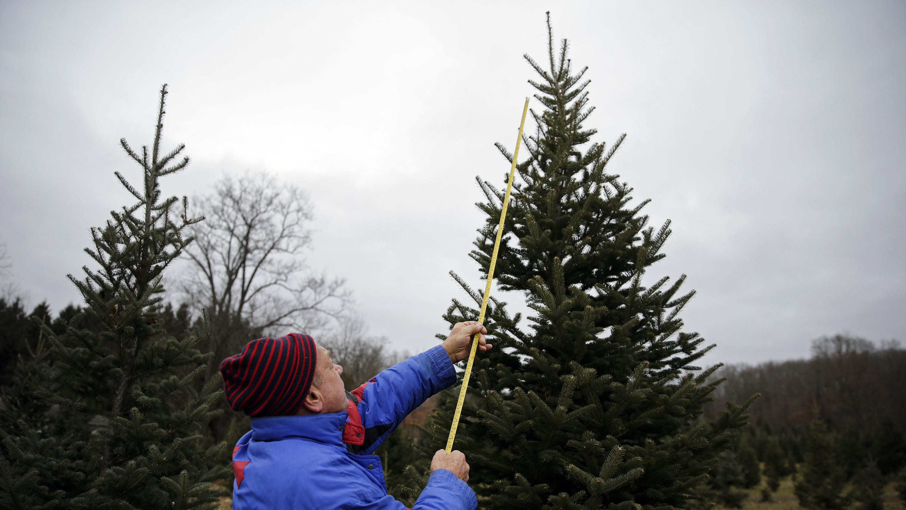 Appleton Christmas Trees: Where To Find Cut-your-own Fir
