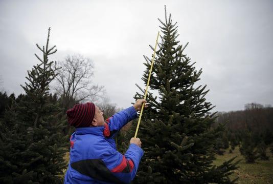 Lede Apc Christmas Tree Hunt 112518 Rbp067