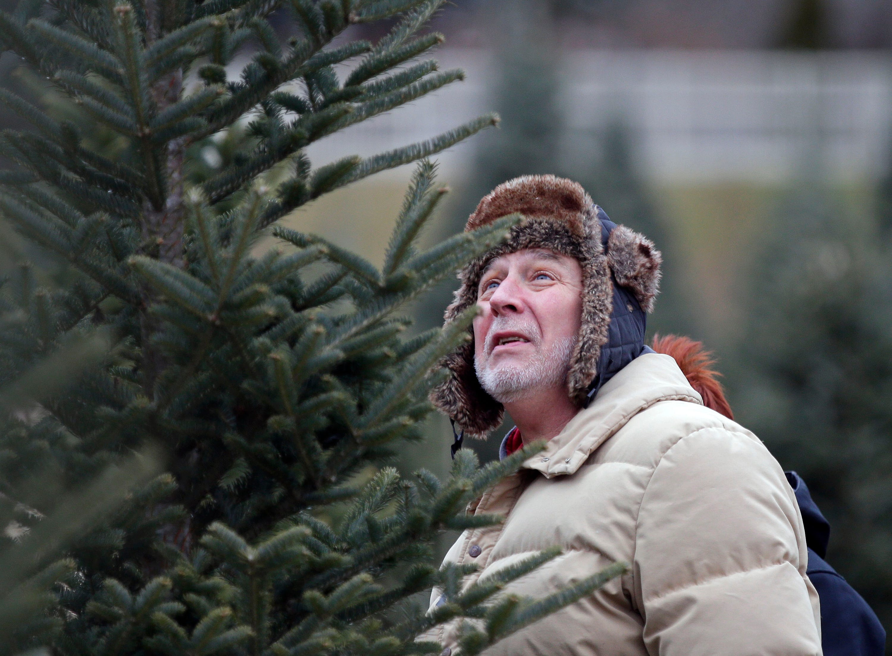 Mike Schommer of Appleton studies a potential Christmas tree Sunday, November 25, 2018, at the Mosquito Hill Tree Farm in New London, Wis.Ron Page/USA TODAY NETWORK-Wisconsin