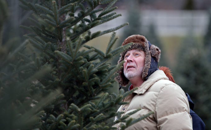 Mike Schommer of Appleton studies a potential Christmas tree Sunday,  November 25, 2018, - Fox Cities In Pictures: A Weekly Gallery