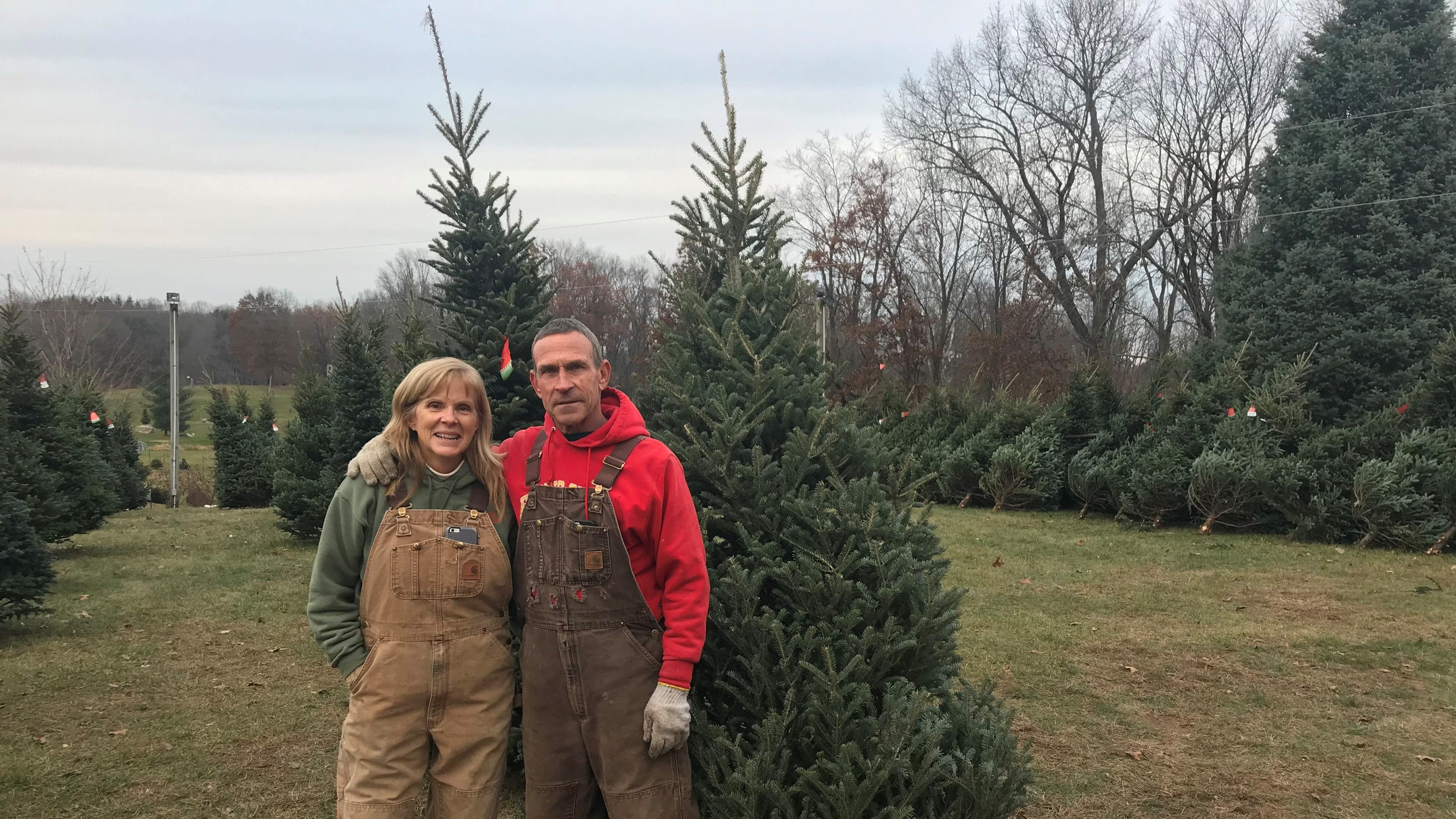 Christmas Michigan.Michigan Christmas Tree Farmers Anticipating The Best Year