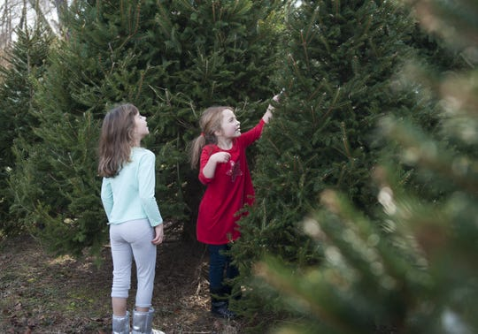 Sisters Emma and Madeline Nasto of Mount Laurel select a Christmas tree at Cowperthwait's Maplehurst Farm in Southampton in 2014. The longtime family tradition of visiting tree farms continues as Amazon delivers competition by shipping full-size trees.