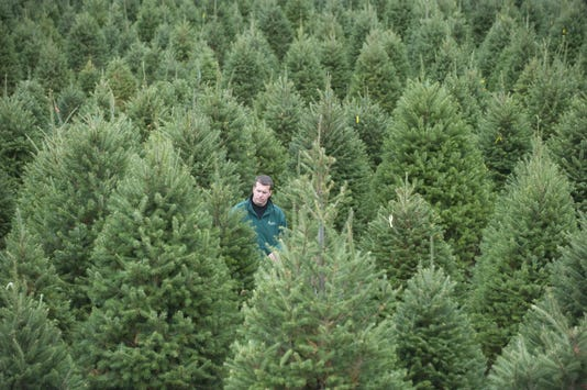 Christmas tree farms: Where can I buy a real tree in South Jersey?