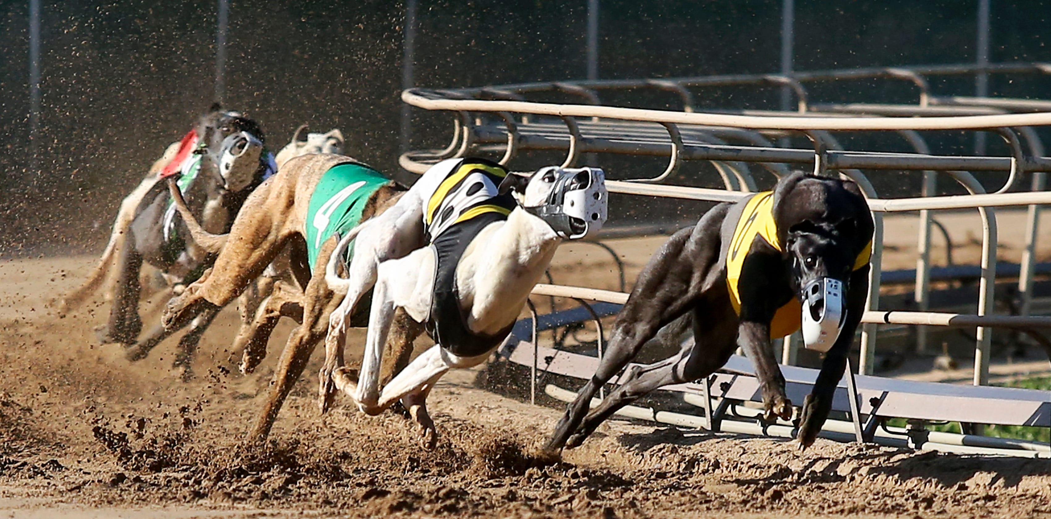 """GREYHOUND RACING Street Sign race competition dog track adopt18/"""""""