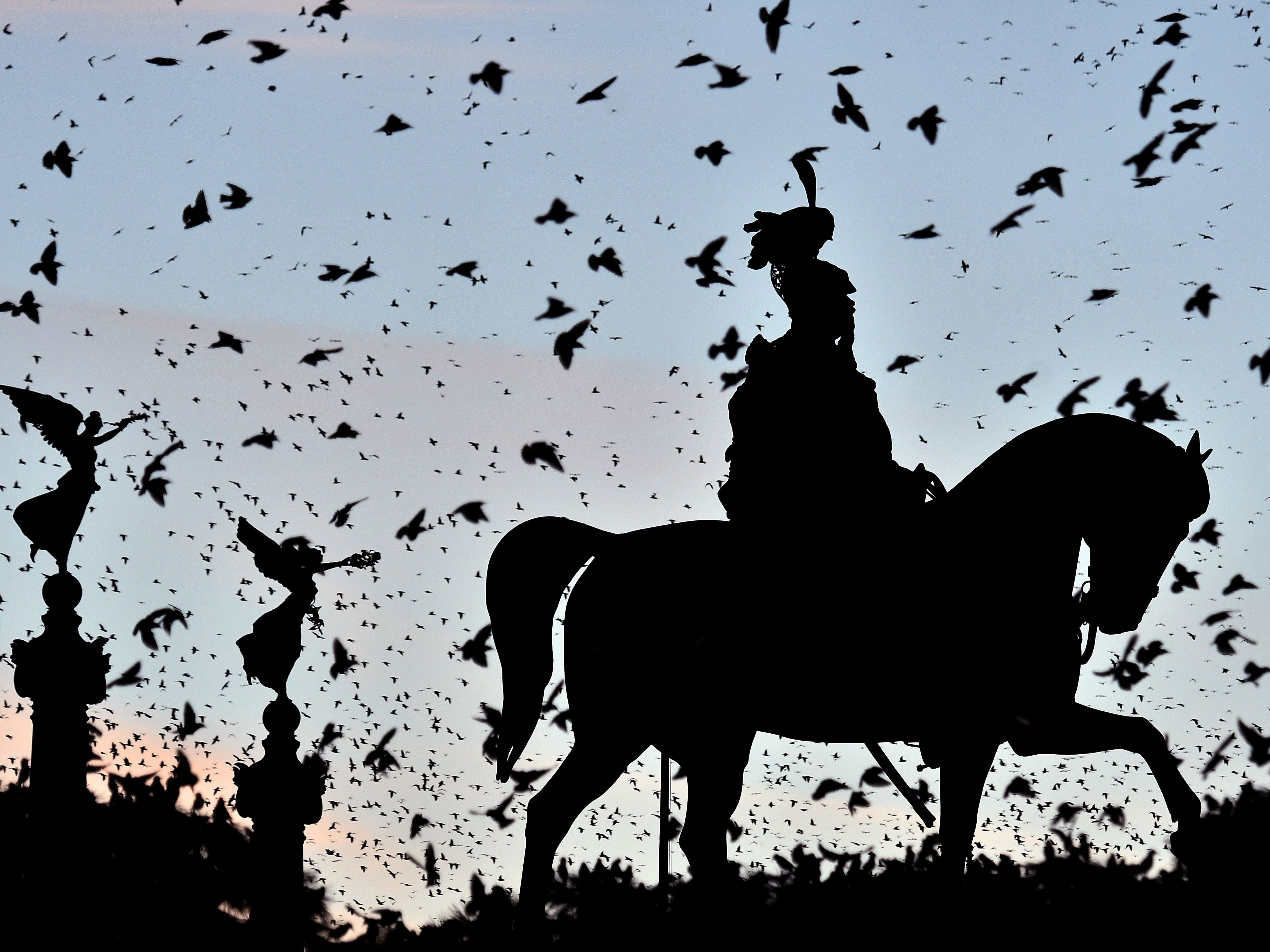 A swarm of starlings flying over the city center is pictured as the sun sets over the Altare della Patria (Unknown soldier)  monument in Rome on November 22, 2018.