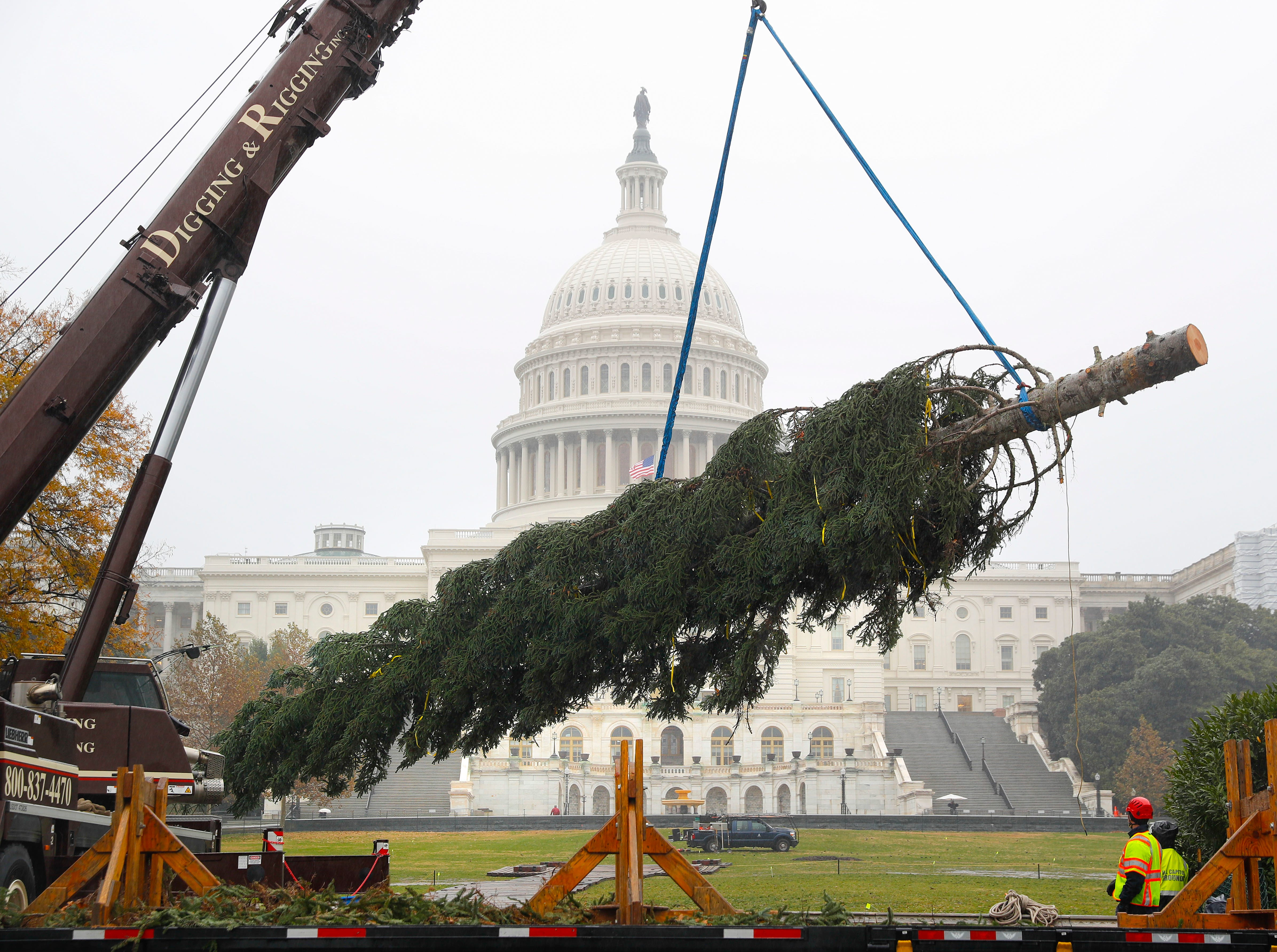 Workers move the 2018 U.S. Capitol Christmas Tree as it arrives in Washington, D.C., Monday, Nov. 26, 2018.