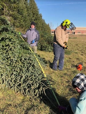 Two Rivers High School students Dustin White and Grace Schumacher measure and prepare a tree for sale after teacher volunteer Rob Henseler cut the tagged tree.