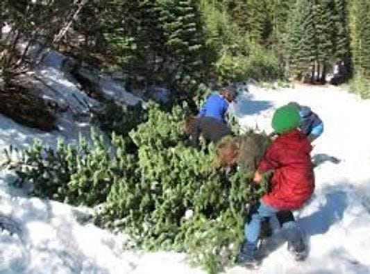 A family struggles with the tree they cut for Christmas on the Lincoln National Forest.