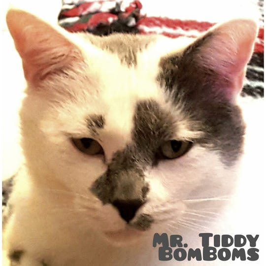 Adoptable Mr Tiddy Bomboms is at the  Animal Village Nm shelter in Alamogordo.