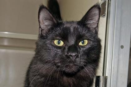 Krishna is a 5-month-old affectionate, playful and very curious male.