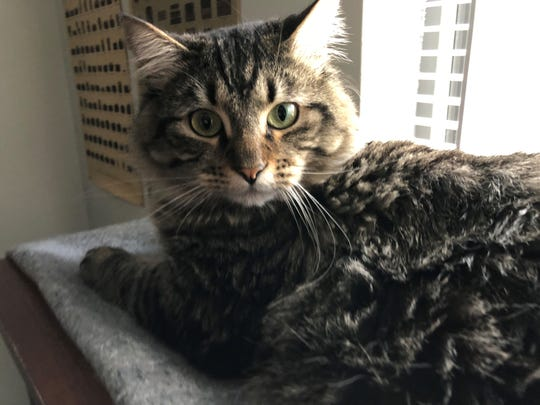 Sokka, a two-year-old cat, is believed to have run away during a fire at her family's apartment complex at 3238 Redwood Lane in the early morning hours of Wednesday, Nov. 21. Her humans, Ryan Ward and his teenage daughter Chloe, are holding out hope that she'll be found alive.