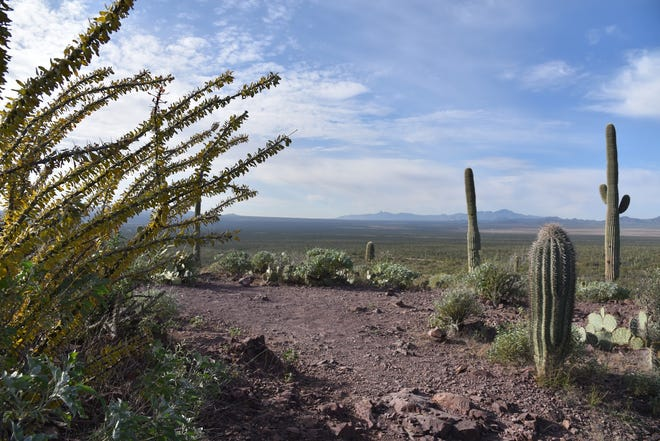Overlooking the Tohono O'Odham reservation from the Brown Mountain Trail.