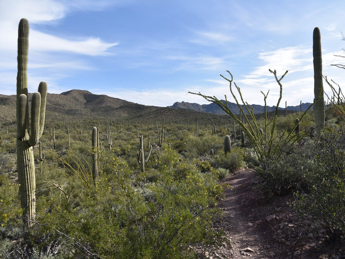 The lower leg of the Brown Mountain Trail features views of the Tucson Mountains.