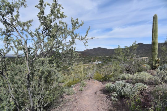 Arizona-Sonora Desert Museum seen from the Brown Mountain Trail.