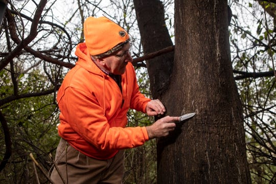 The Pennsylvania Department of Agriculture is encouraging hunters to take action by scraping Spotted Lanternfly egg masses while they are out hunting.