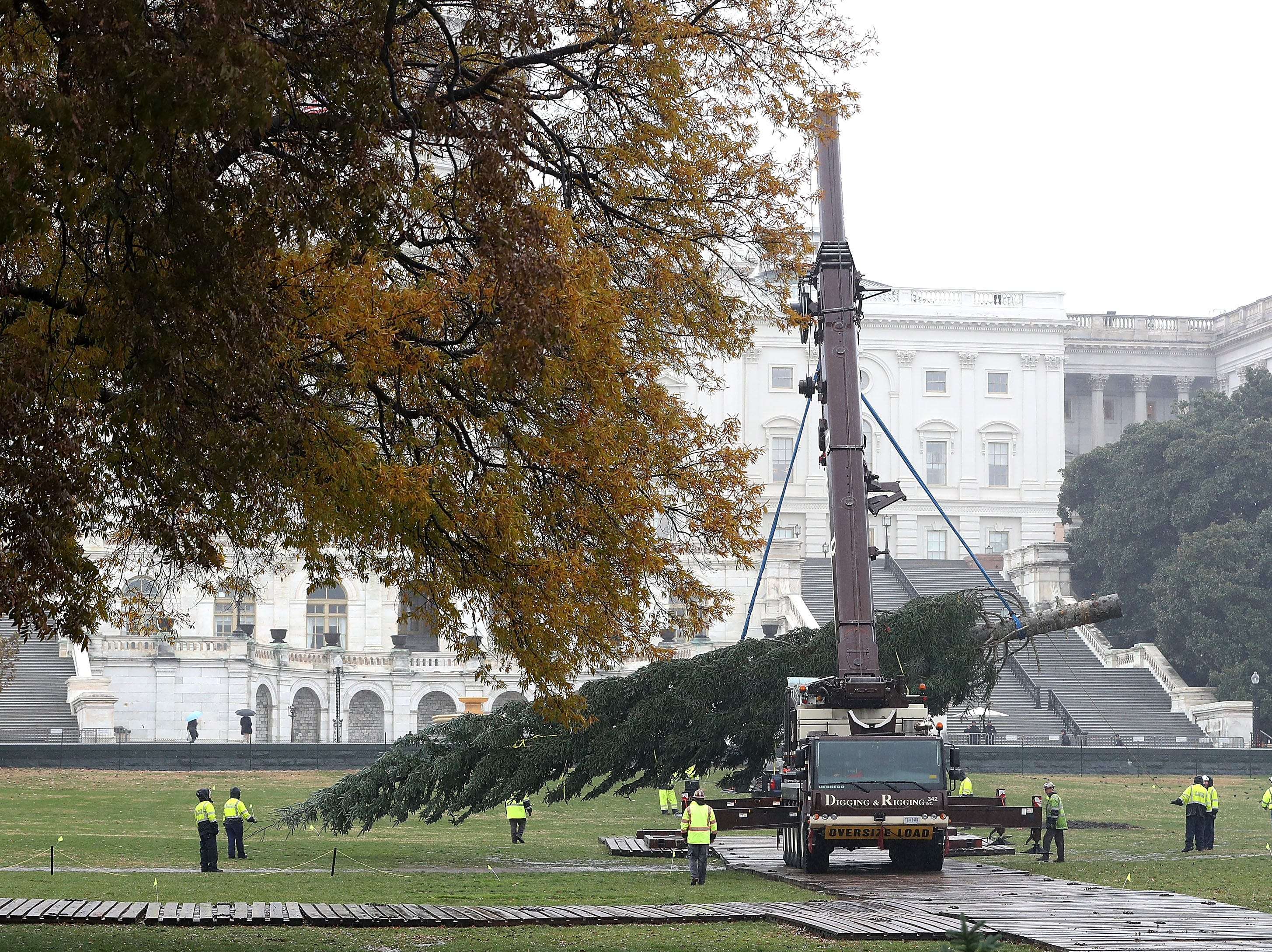 WASHINGTON, DC - NOVEMBER 26:  A large crane moves the U.S. Capitol Christmas Tree into place on the west front of the U.S. Capitol, on November 26, 2018 in Washington, DC. The 80-foot tall Noble Fir is from Oregon's Willamette National Forest.