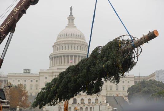 Ap Capitol Christmas Tree A Usa Dc