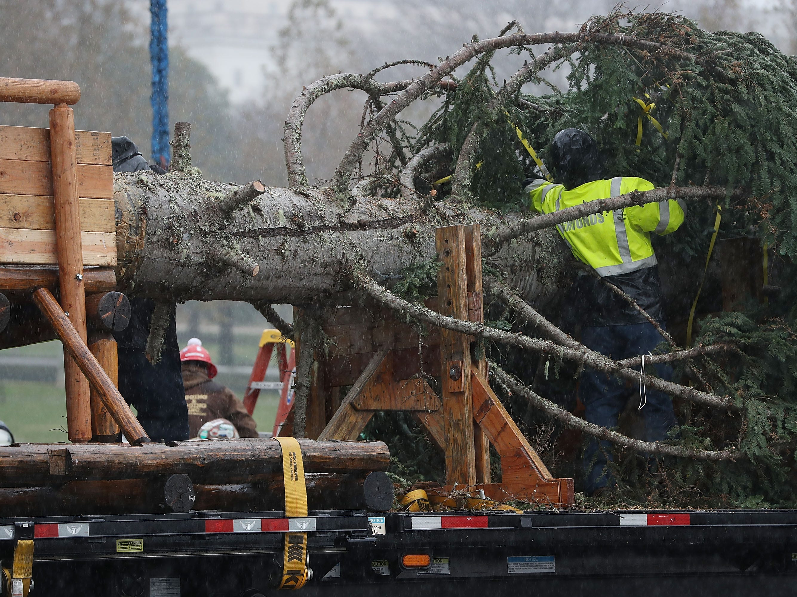 WASHINGTON, DC - NOVEMBER 26: Workers prepare the U.S. Capitol Christmas Tree to be lifted off of a flatbed before being installed on the west front of the U.S. Capitol, on November 26, 2018 in Washington, DC. The 80-foot tall Noble Fir is from Oregon's Willamette National Forest.