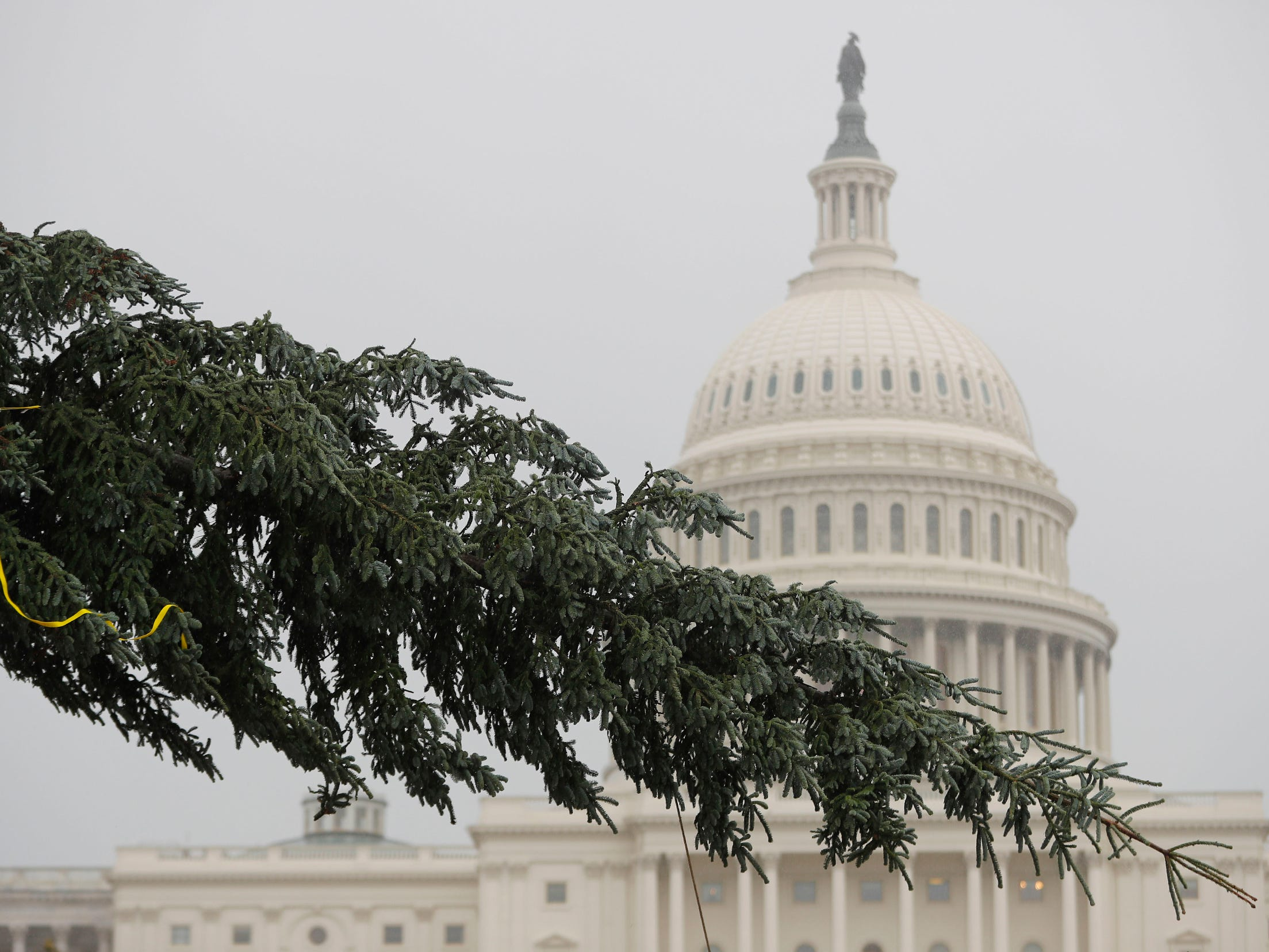 Workers move the 2018 U.S. Capitol Christmas Tree as it arrives to the West Lawn of the U.S. Capitol Building in Washington, Monday, Nov. 26, 2018, from Willamette National Forest in Oregon.