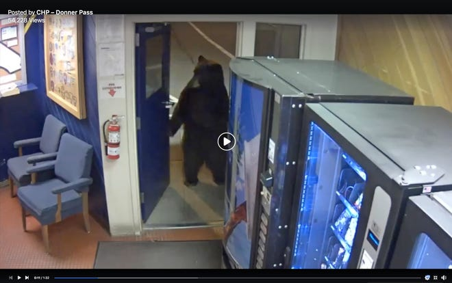 Footage shows a bear scanning the premises at a police facility in Truckee, California.