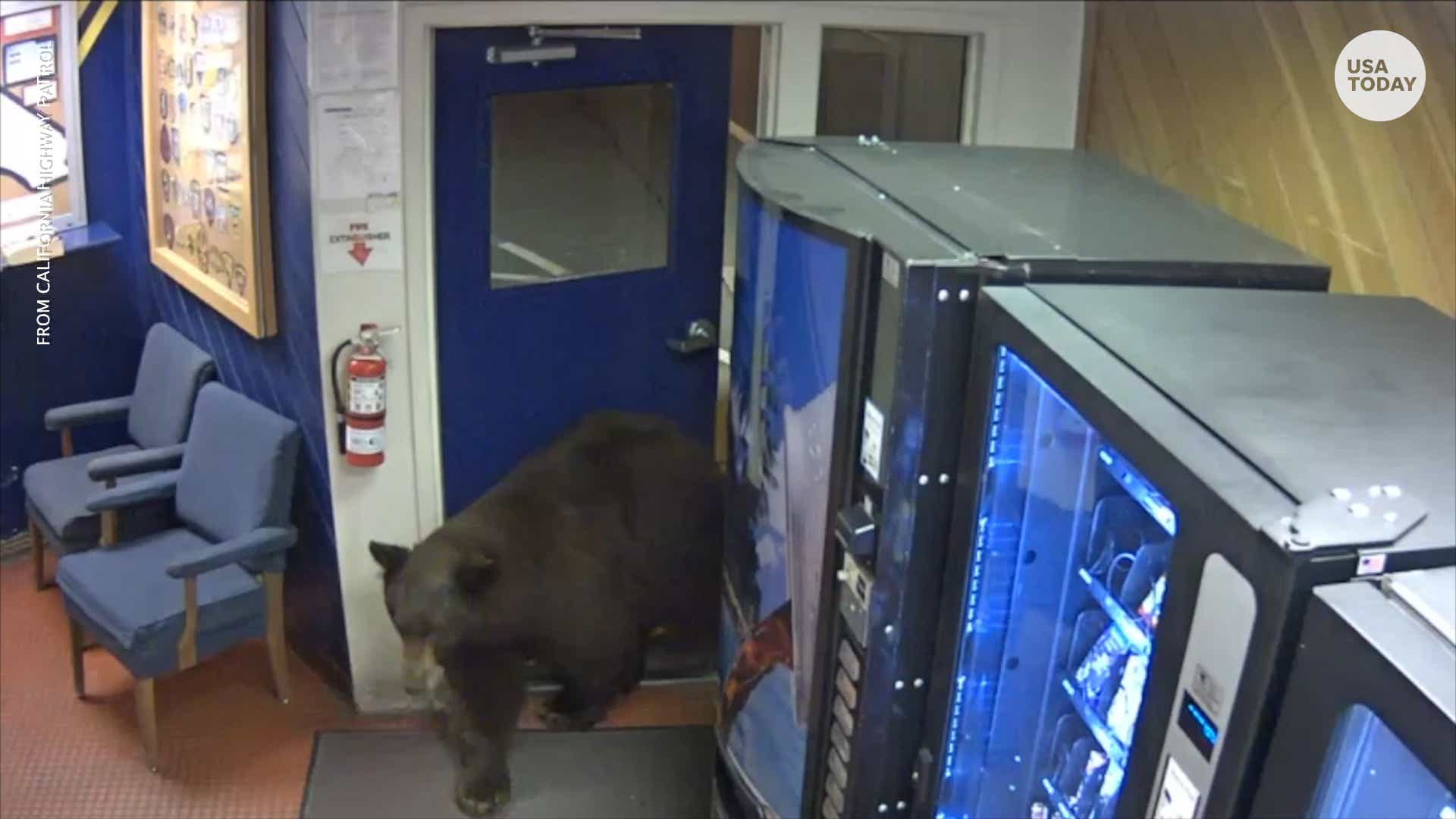 Bear opens door, walks right into California police station