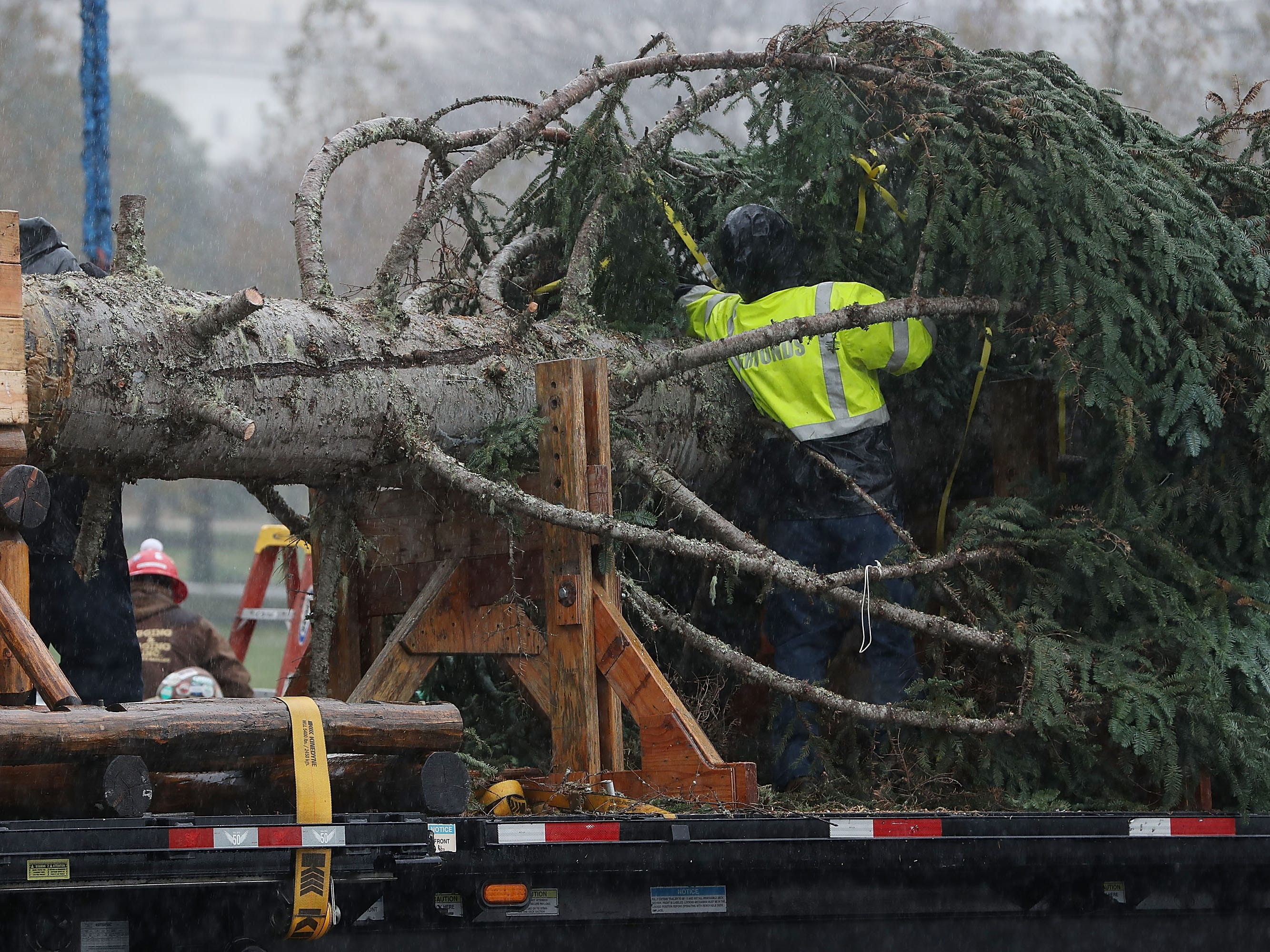Workers prepare the U.S. Capitol Christmas Tree to be lifted off of a flatbed before being installed on the west front of the U.S. Capitol, Nov. 26, 2018 in Washington.