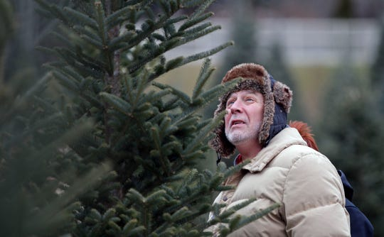 Mike Schommer of Appleton studies a potential Christmas tree Sunday at the Mosquito Hill Tree Farm in New London.