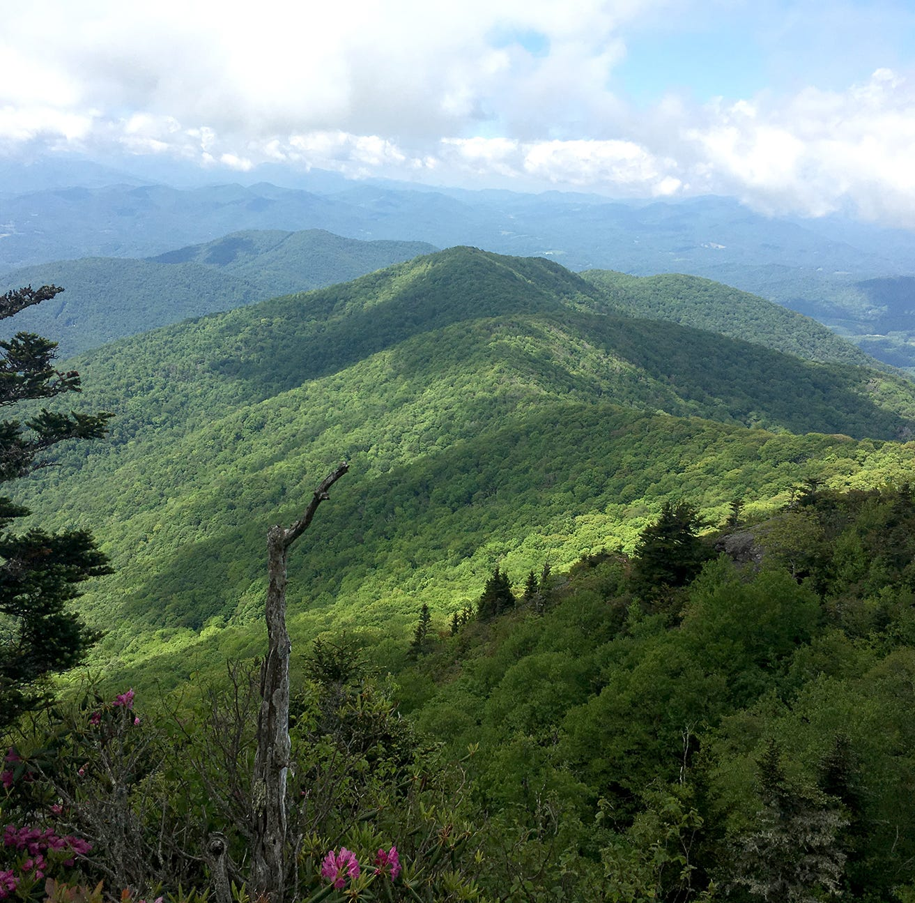 Highlands of Roan conservation to forever protect mountain, will aid in climate resilience