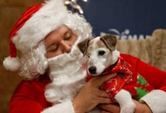 PetSmart Dog Santa