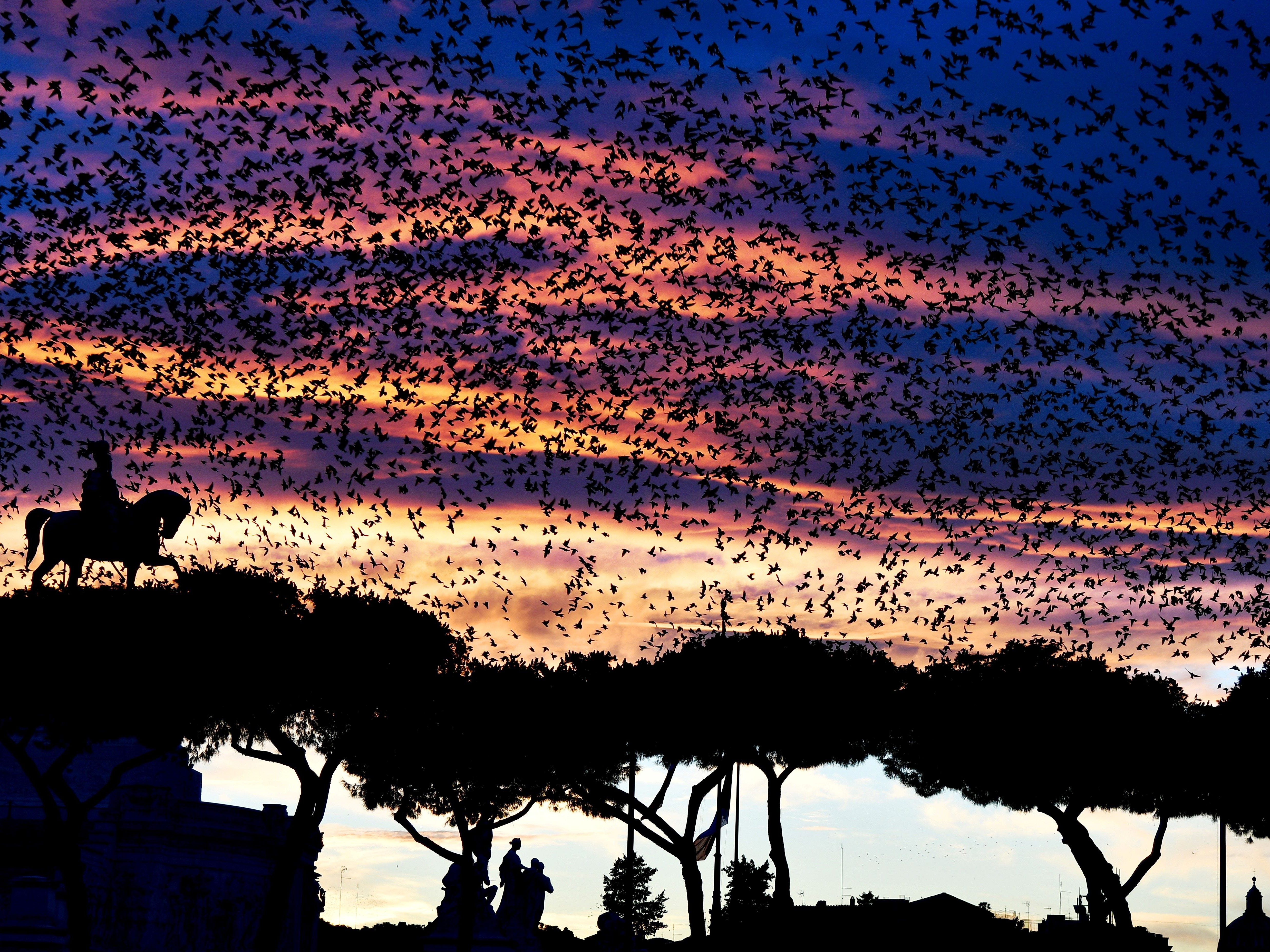 A swarm of starlings flies over the Altare della Patria monument (Unknown soldier) in the city centre of Rome during sunset, on November 27, 2018.