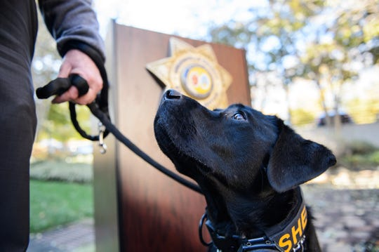 Greenville County Sheriff's Office K-9 Queue sits during a press conference in 2018.