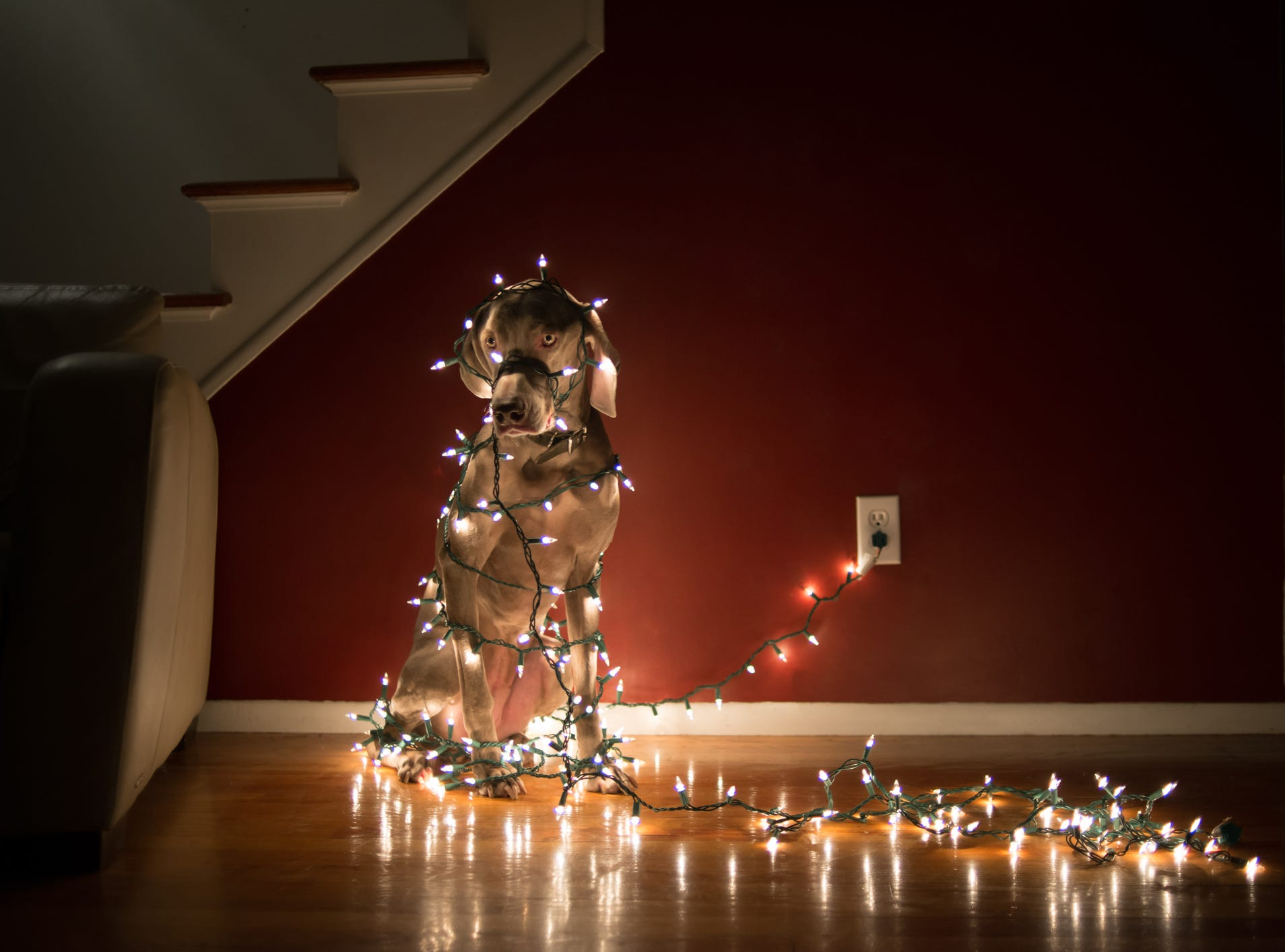 Are you so stressed that you decorated the dog and walked the tree?  Try these tips.