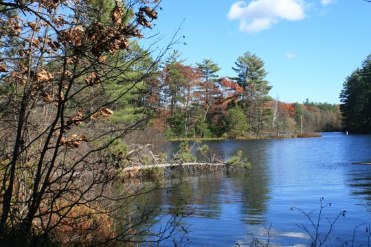 Nearly 4.4 miles of natural shoreline along Katherine Lake in Oneida County was included in the Yawkey Lumber Co.'s donation of 430 acres of forest and wetlands to the Northwoods Land Trust.