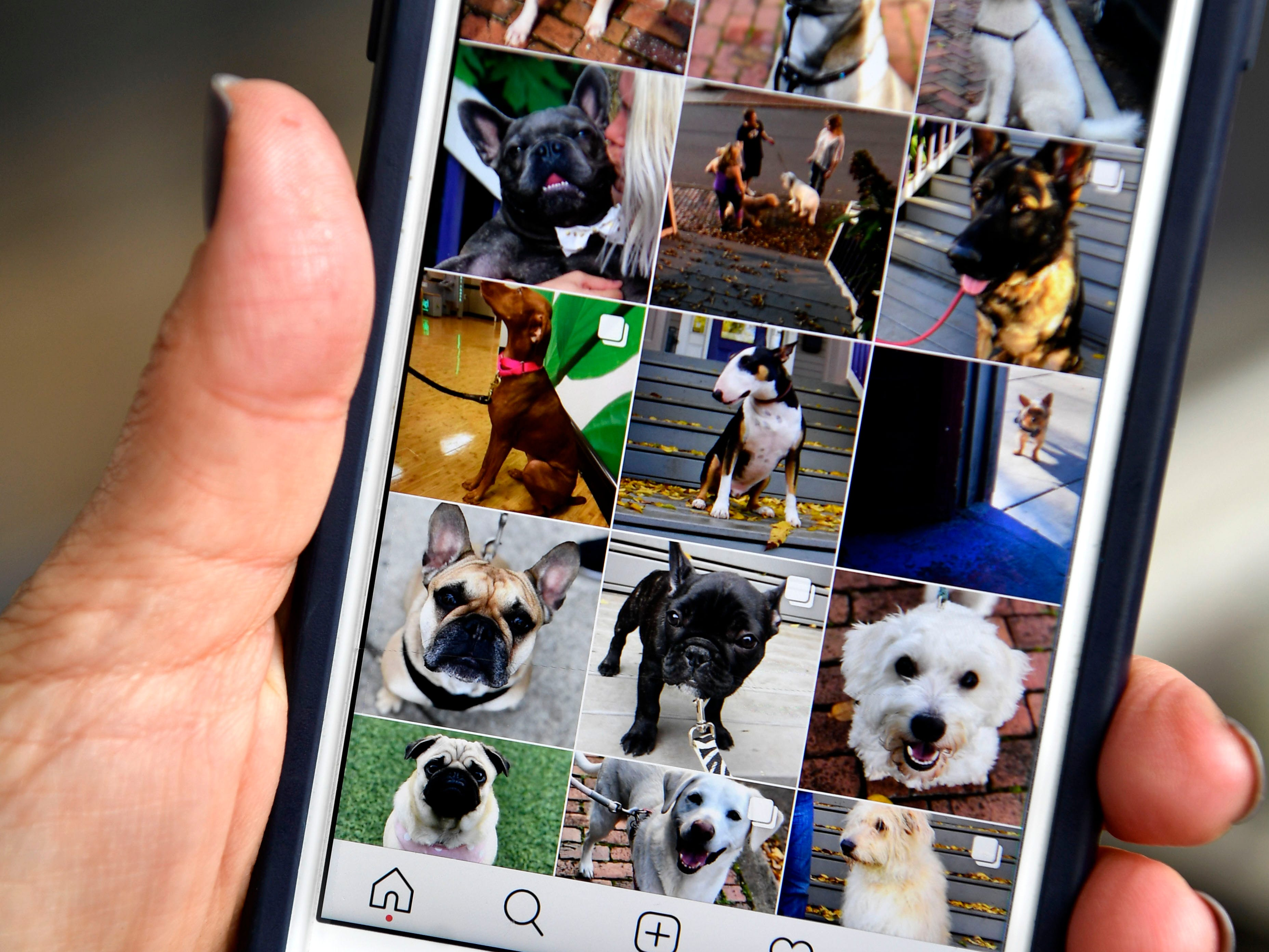 "Sheila Cope runs the popular Instagram account ""Germantown Dogs,"" and has documented over 150 dogs that have passed by her door.