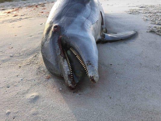 Dolphin at Naples Beach Hotel & Golf Club  2