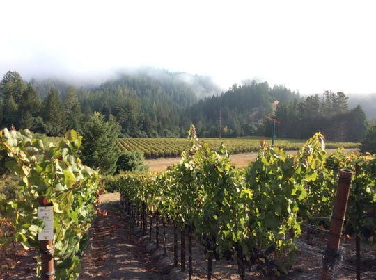 Guests at the 19th annual Naples Winter Wine Festival will have a chance to bid on extravagant auction lots, including private tours of wineries in Sonoma, California.