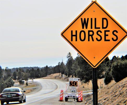Wild Horse Radar