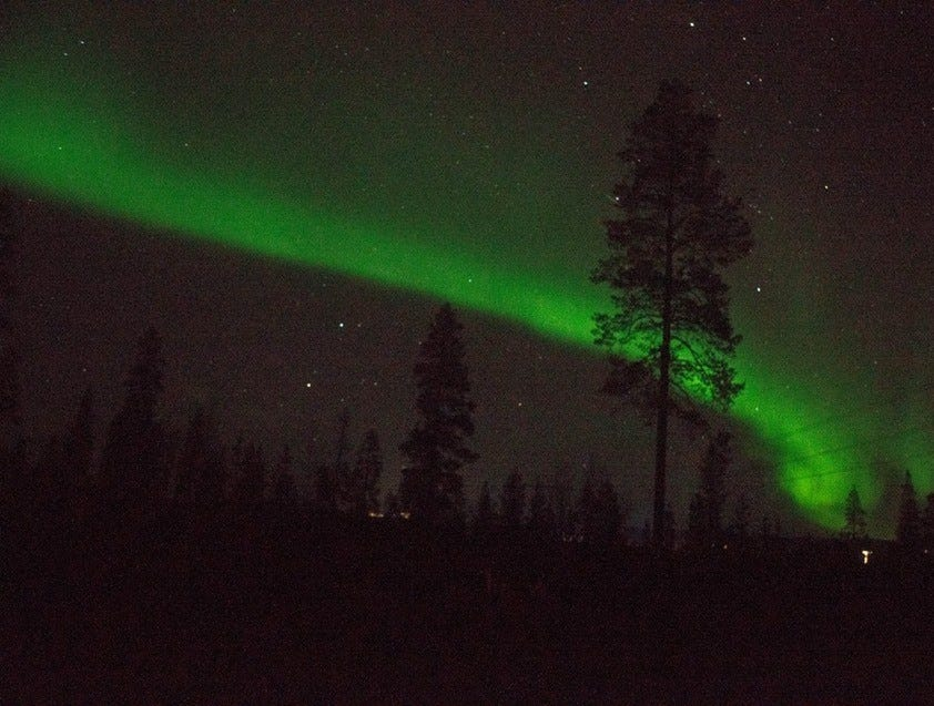 The Northern Lights shoot spectacularly over the trees of northern Finland.